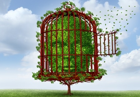 4.51 L'Entreprises libérée : Quand l'imaginaire tente de se frayer un chemin dans les sciences de gestion ...