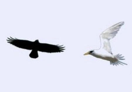 Les oiseaux noirs et les oiseaux blancs