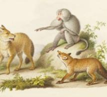 Le Loup plaidant contre le Renard par-devant le Singe