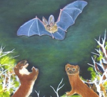 La Chauve-souris et les deux Belettes