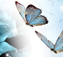 La naissance du papillon