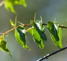 Le petit arbre épineux
