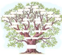 De l'arbre au réseau