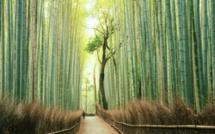 L'histoire de la fougère et du bambou ou quand la résilience est une force